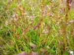 Green fields, Iceland