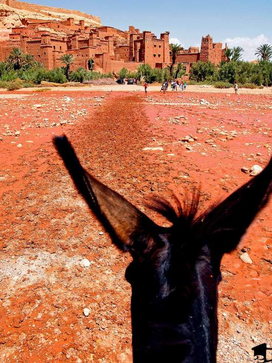 Riding a donkey in Morocco