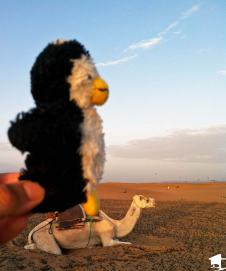 Tiny on a Camel