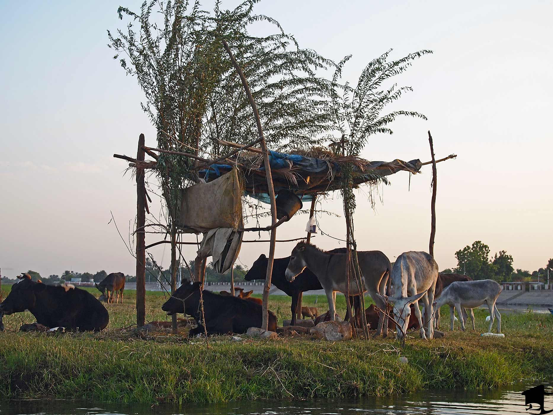 Animals along the Nile