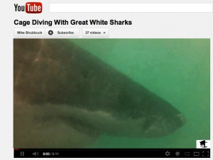 YouTube Shark Video