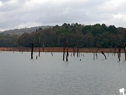 Periyar Lake inside Periyar National Park, India.